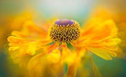 ყვავილების მოვლა, რჩევები: