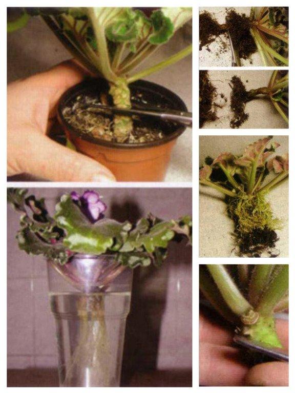 ჯანმრთელი და ლამაზი მცენარის გაზრდა