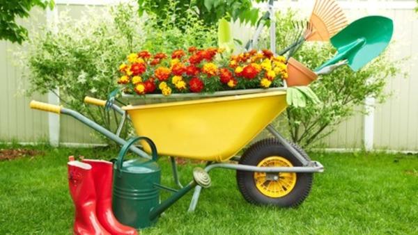 ხალხური საშუალებები მცენარეებისთვის