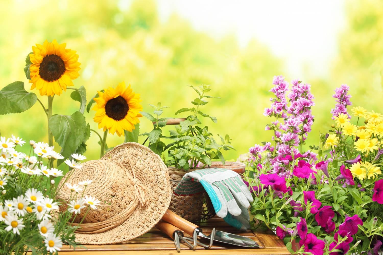 იოდი სახლის მცენარეებისთვის