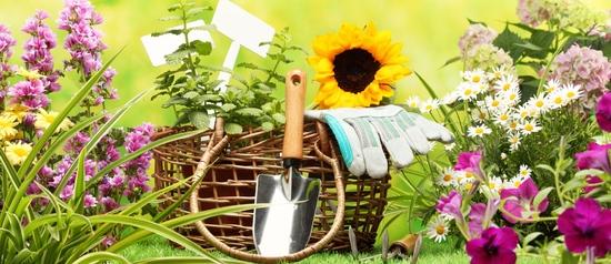 სასუქი ბაღის ყვავილებისთვის