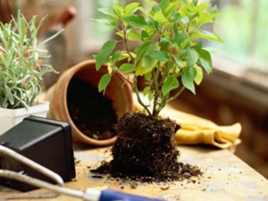 შეცდომები მცენარეთა მოვლის დროს