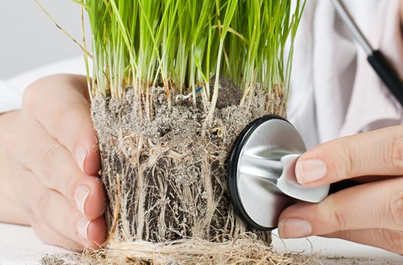 ოთახის მცენარეების დაავადებები