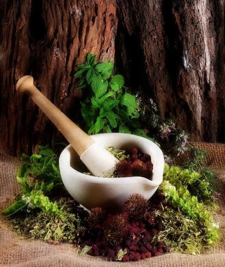 მცენარეების მკურნალობა