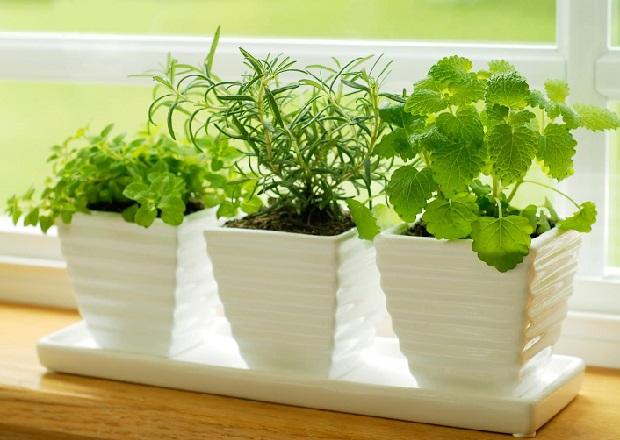მცენარეები სამზარეულოსთვის