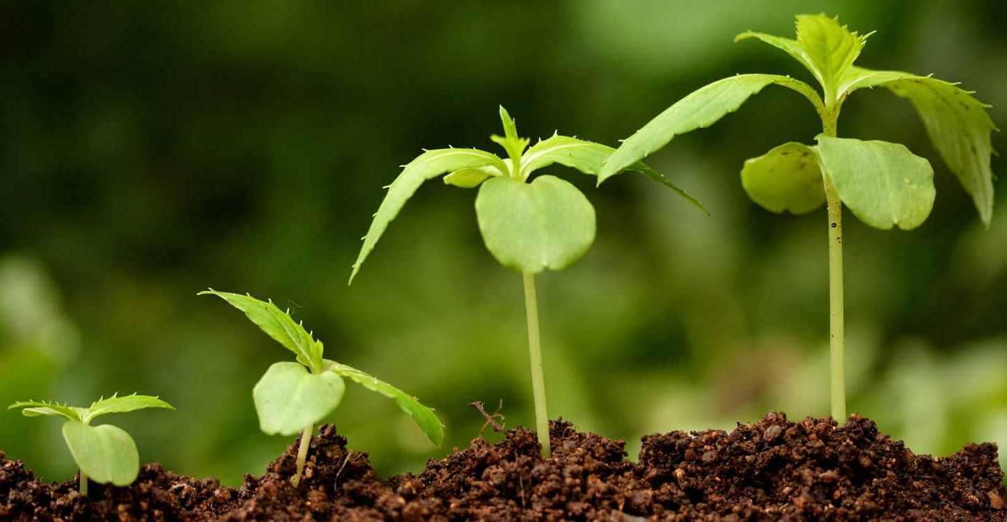 მცენარეთა ზრდის ბიოსტიმულატორები