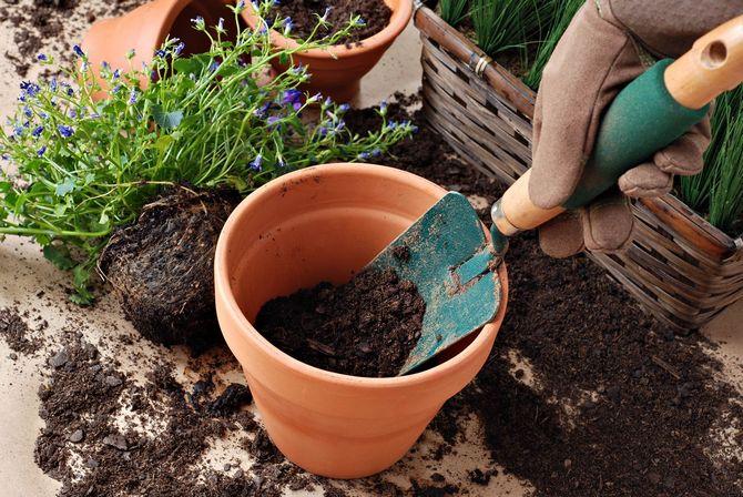 მიწა ოთახის მცენარეებისთვის