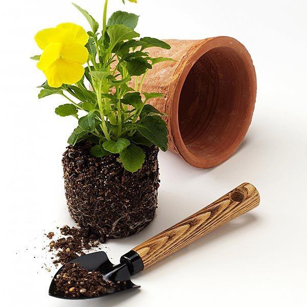 მცენარეების გადარგვა