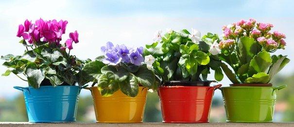 როგორ ვიყიდოთ მცენარე