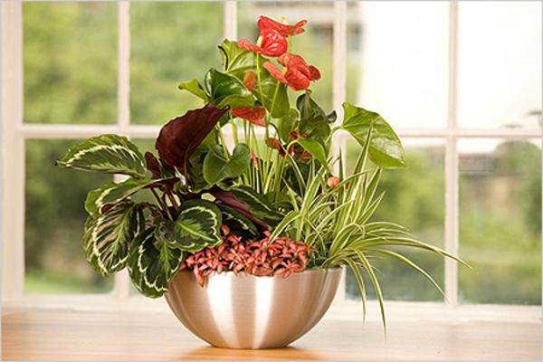 რეანიმაცია ზედმეტად მორწყული მცენარეებისთვის