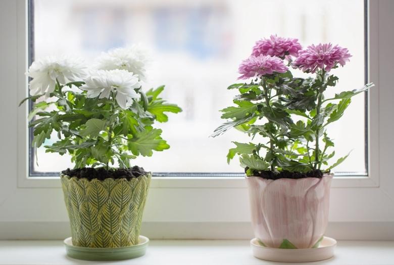 სუფთა ჰაერი მცენარეებისთვის