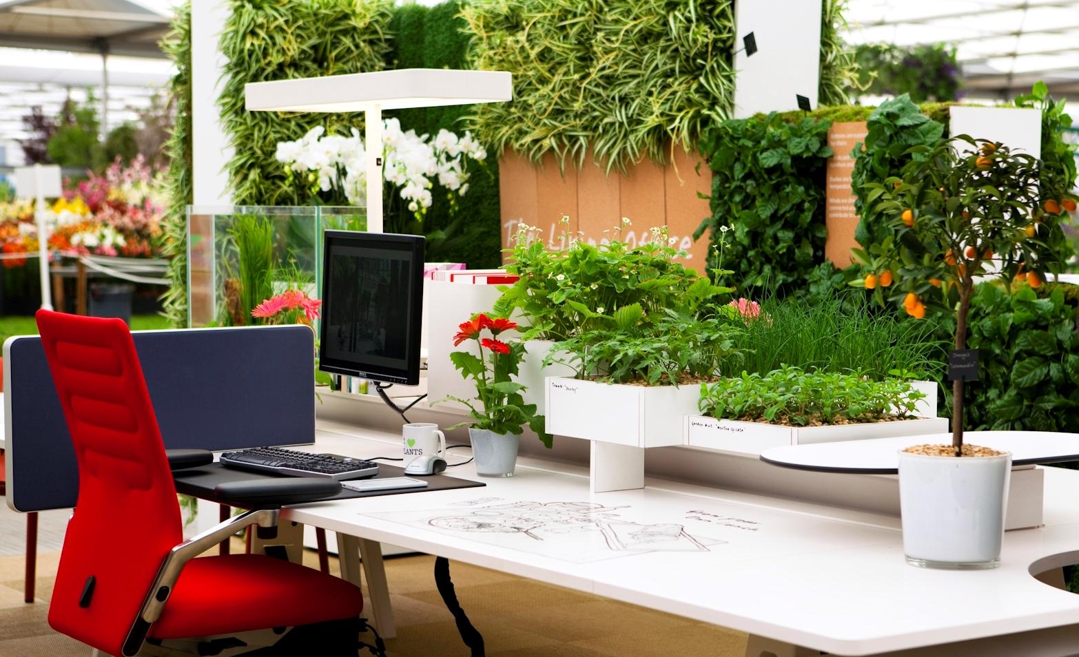 მცენარეები ოფისისთვის