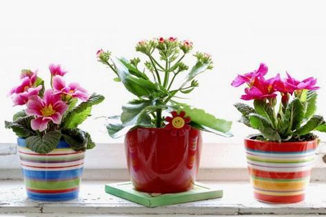 ყველაზე პოპულარული ოთახის მცენარეები