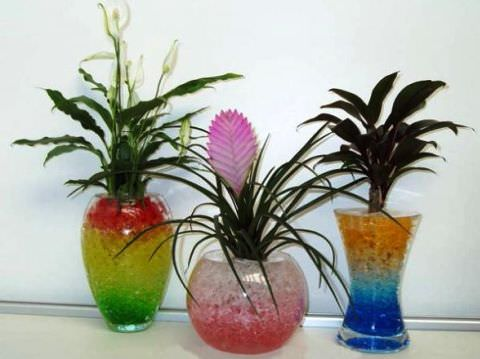 ჰიდროგელი მცენარეებისთვის