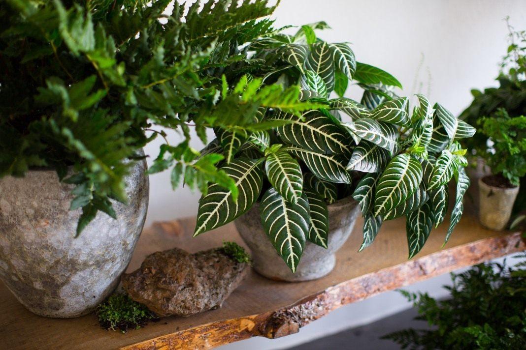 5 ყველაზე მკაცრი ოთახის მცენარე