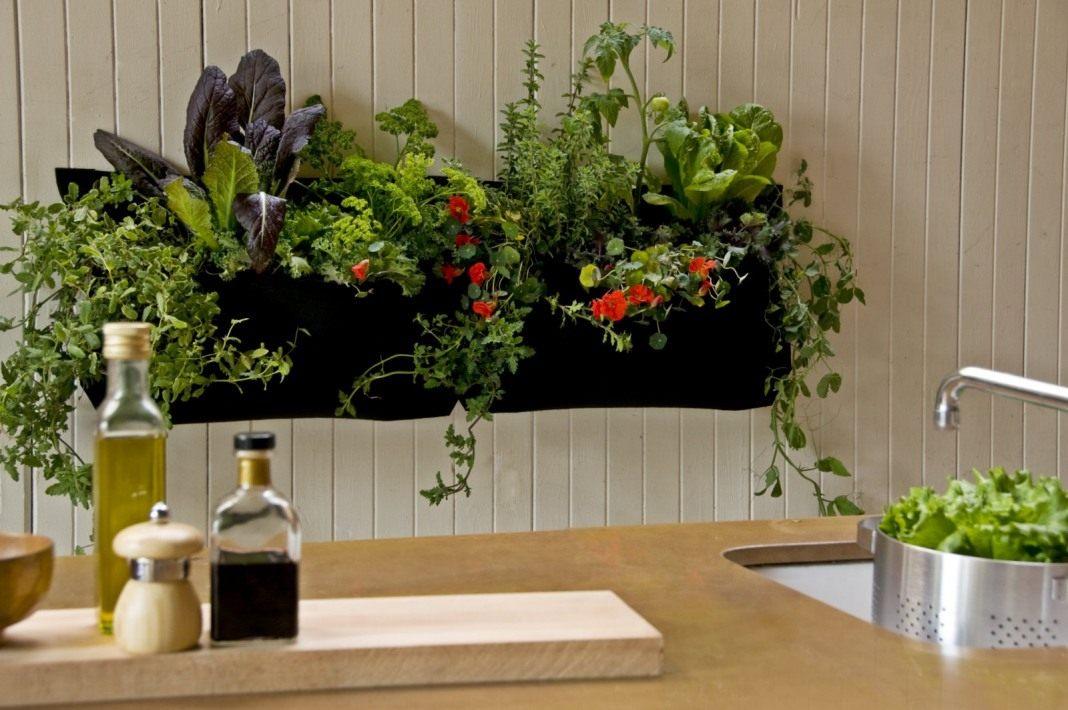 8 საუკეთესო ოთახის მცენარე სამზარეულოსთვის