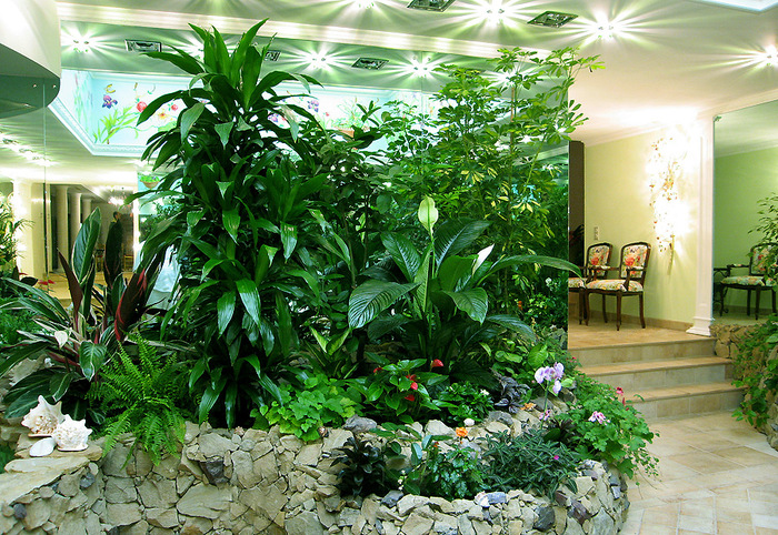 ყველაზე უპრეტენზიო მცენარეები ოფისისთვის