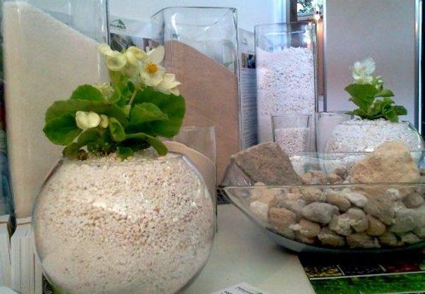 პერლიტი მცენარეებისათვის
