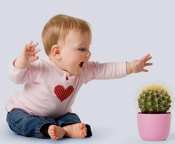 5 იდეალური მცენარე ბავშვისთვის