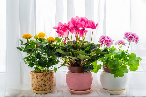 ყვავილები მთელი წლის განმავლობაში