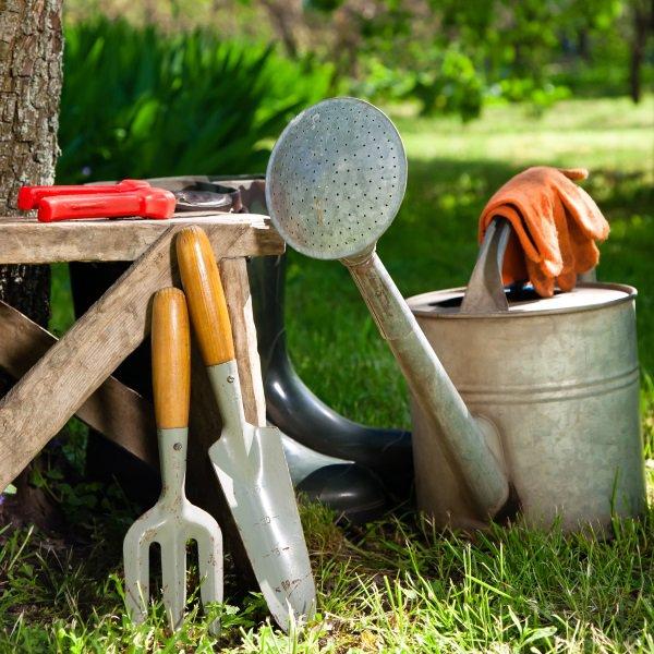 პირველი საგაზაფხულო სამუშაოები ბაღში