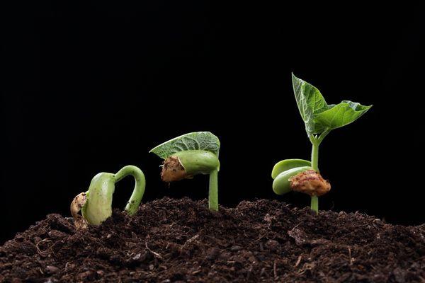 წყალბადის ზეჟანგი მცენარეებისათვის