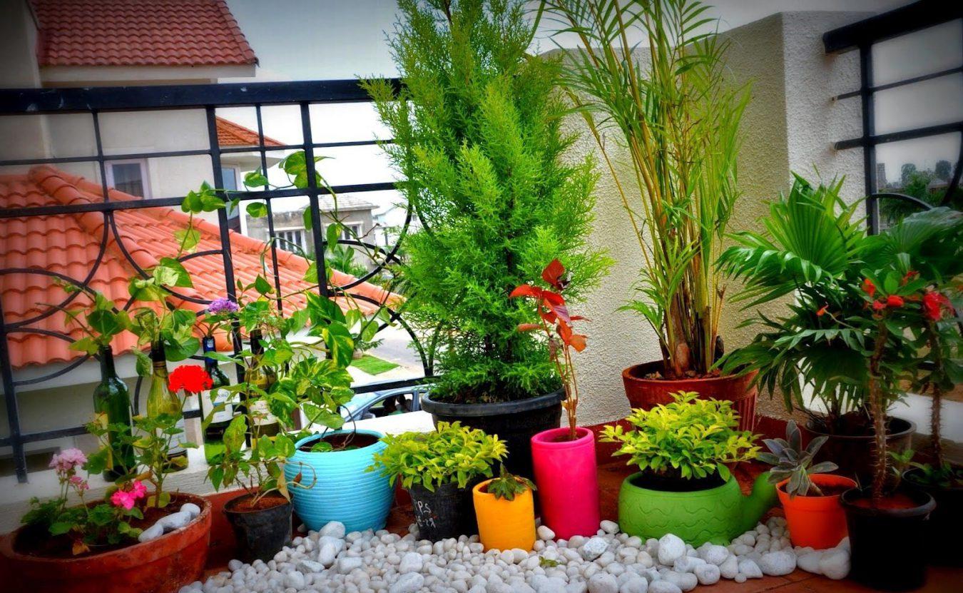 ოთახის მცენარეები აივანზე