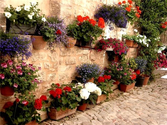 ყვავილები სუფთა ჰაერზე