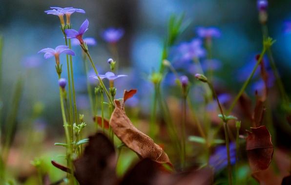 რატომ ავადდებიან მცენარეები