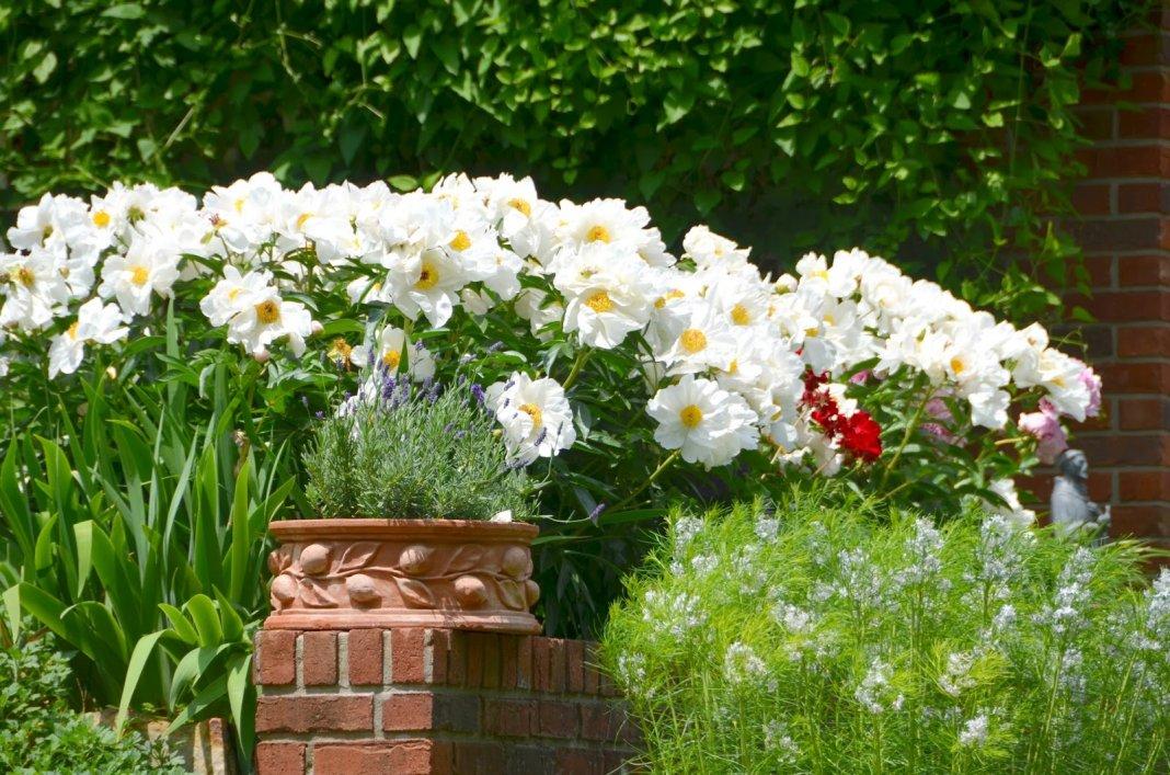 თეთრი ყვავილები ნებისმიერ სეზონზე