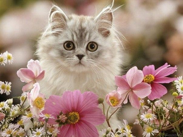 როცა კატა ჭამს თქვენს ყვავილებს