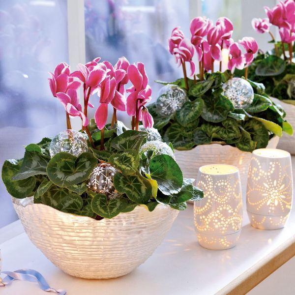 ოთახის სამკურნალო მცენარეები