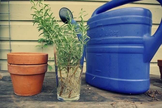 მცენარეთა ზრდის სტიმულატორები