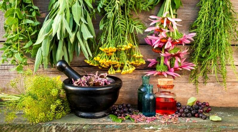 სამკურნალო მცენარეები