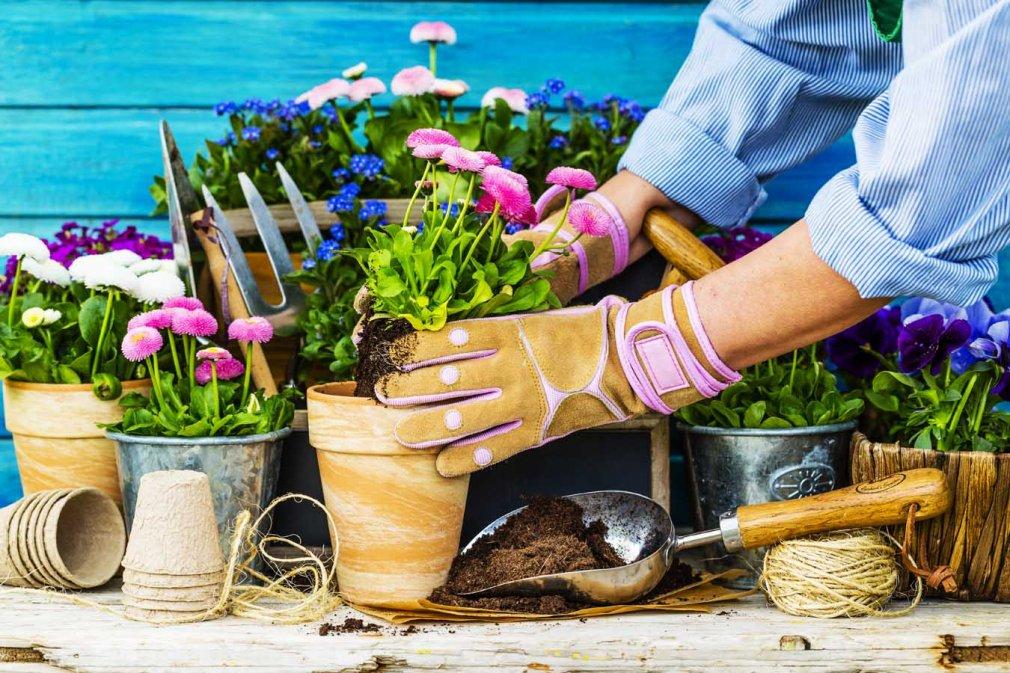 ჰიგიენა მცენარეებისთვის