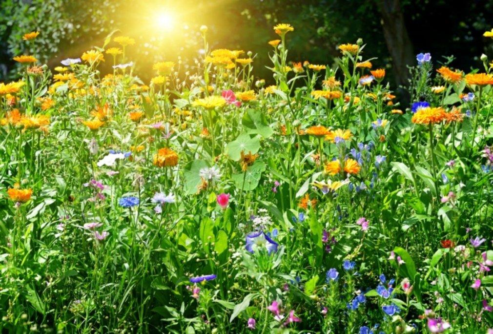 როგორ  შევაჩეროთ აგრესორი მცენარეები