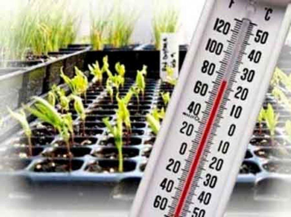 ტემპერატურული რეჟიმი მცენარეებისათვის