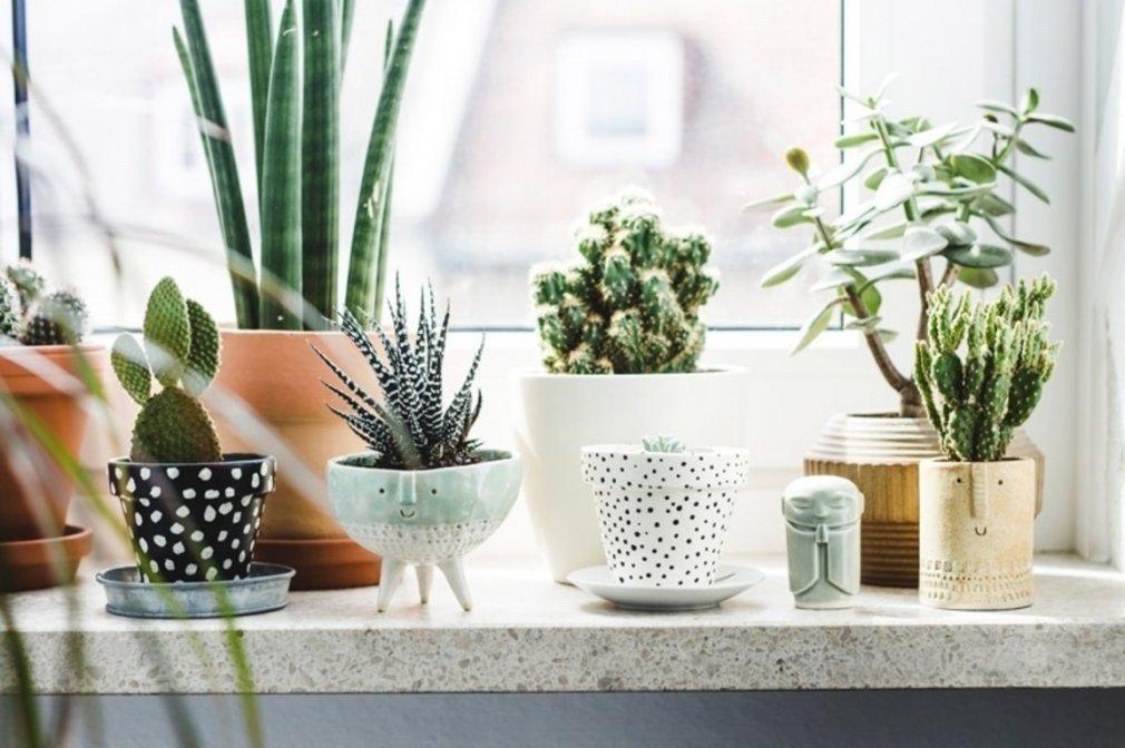 ვარჩევთ ადგილს ოთახის მცენარეებისათვის სინათლის მოთხოვნილების გათვალისწინებით