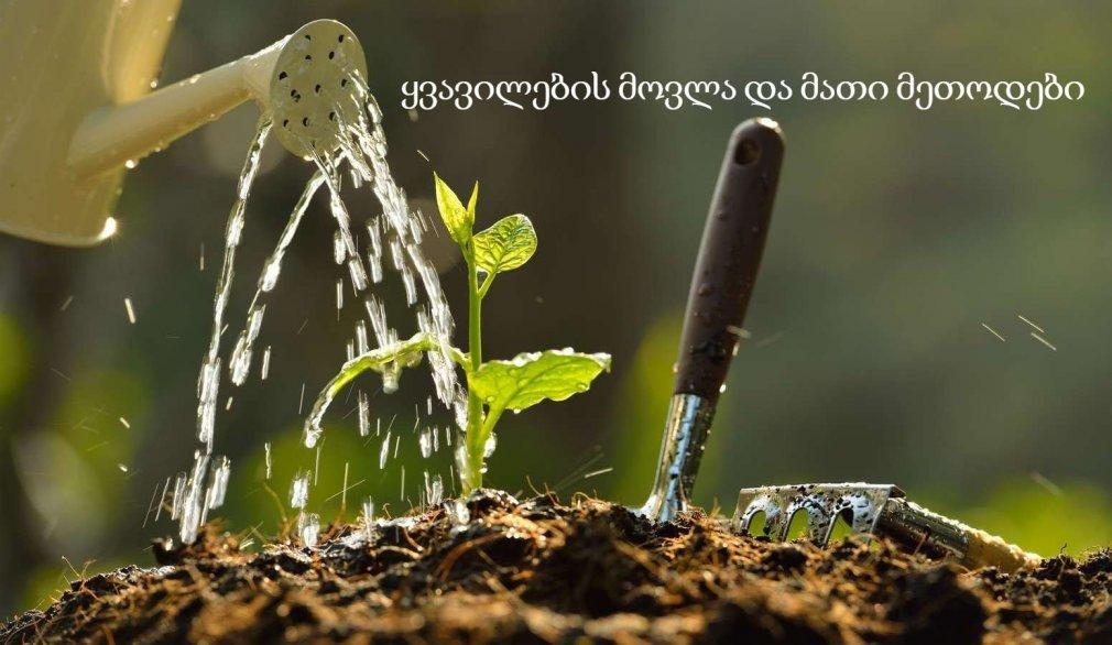 მცენარეების ვეგეტატიური გამრავლება