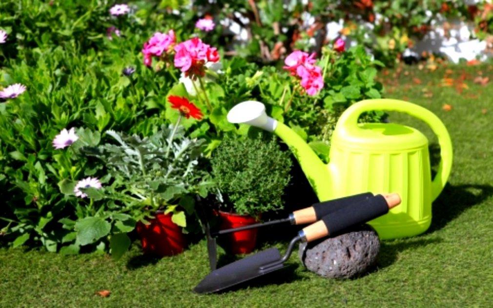 მცენარეები ბაღისთვის, რომლებსაც მორწყვა არ სჭირდება