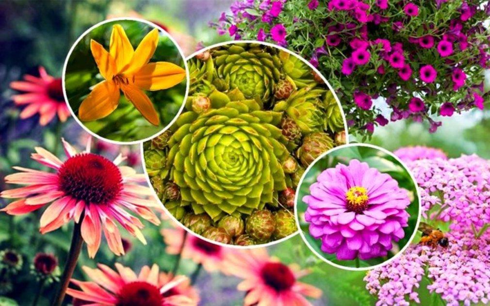 მცენარეები, რომლებსაც ვერ მოკლავთ