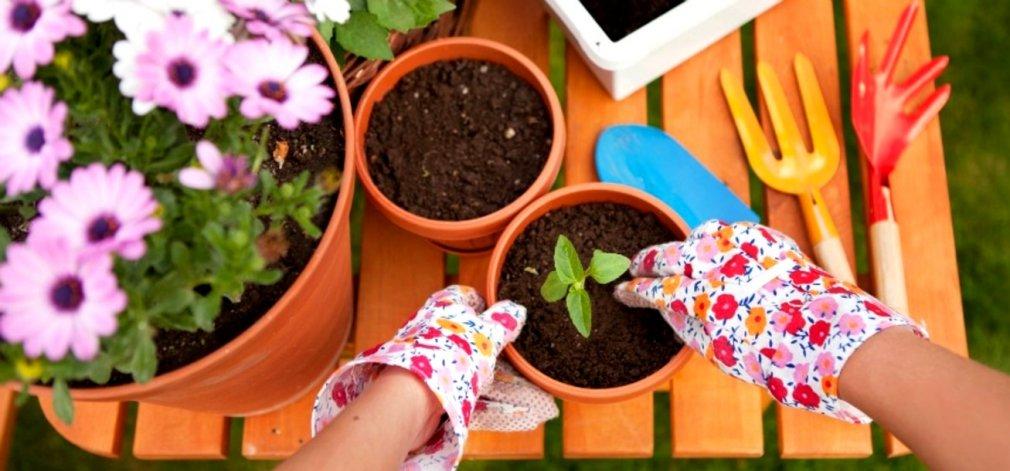 ქოთნები ოთახის მცენარეებისთვის