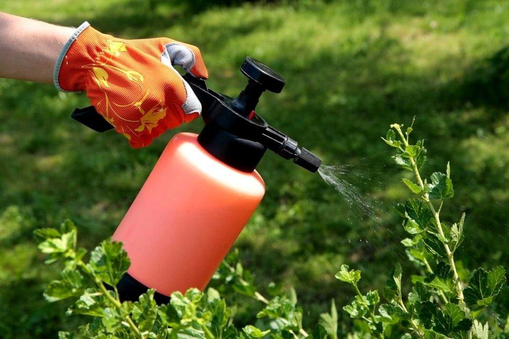 ბიოპრეპარატები მცენარეთა დაცვისთვის