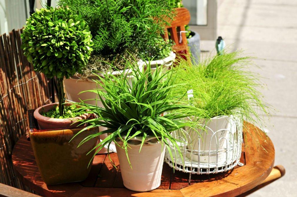 მცენარეები ზარმაცებისთვის