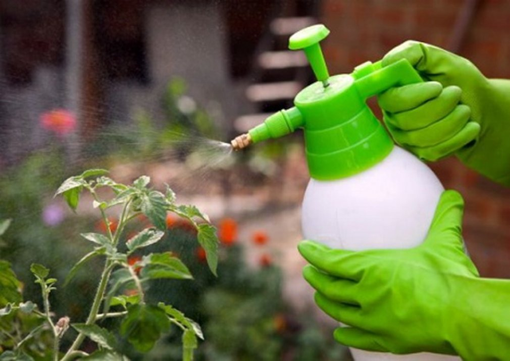 ჰაერის ტენიანობა ოთახის მცენარეებისთვის