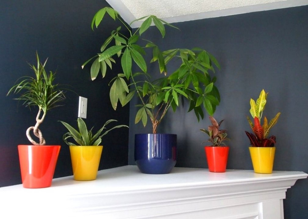 ჩრდილისამტანი ოთახის მცენარეები