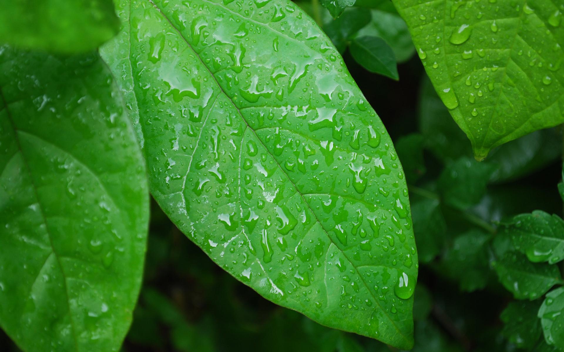 წვიმის წყალი მცენარეებისათვის