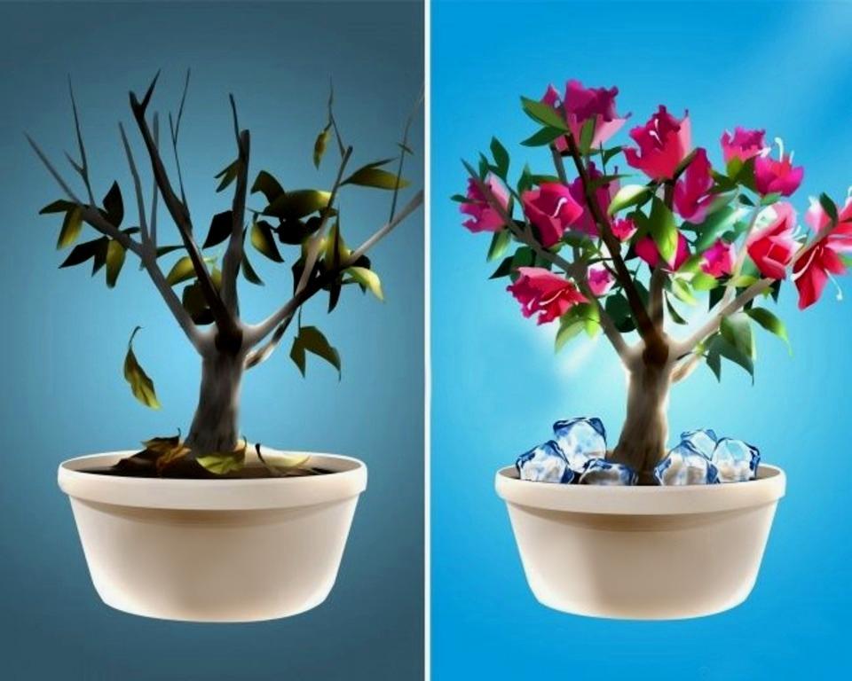 უბრალო ხერხი თქვენი მცენარეების ხანგრძლივი და უხვი ყვავილობისათვის