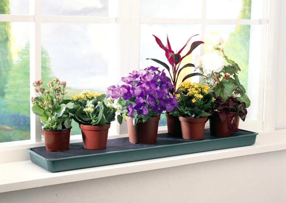ოთახის მცენარეების ვირუსული დაავადებები