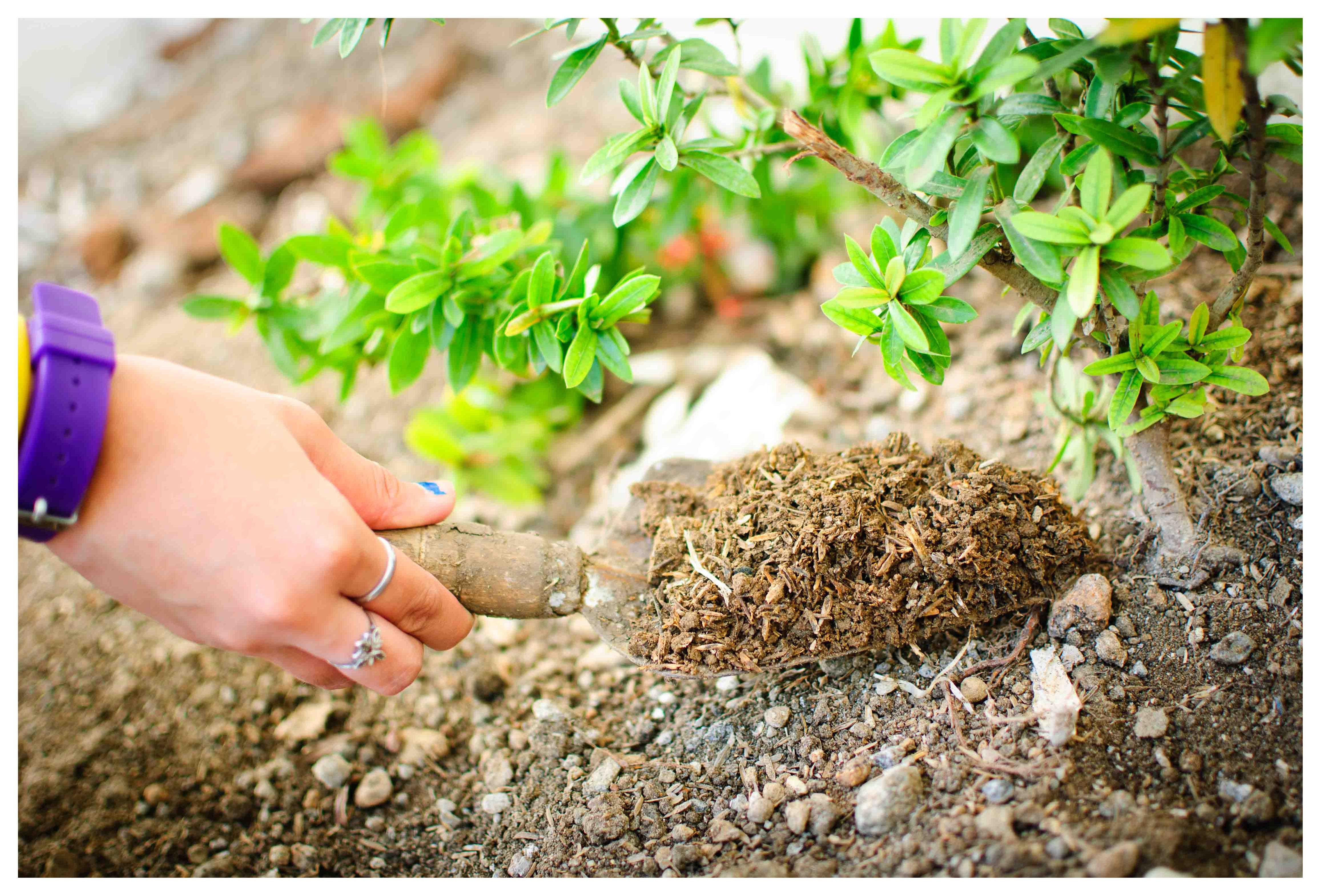 რკინის ჰელატი მცენარეებისათვის